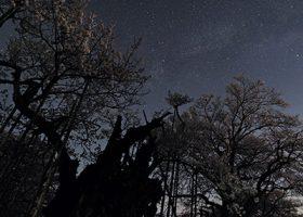 満開の神代桜と天の川(400×400px)